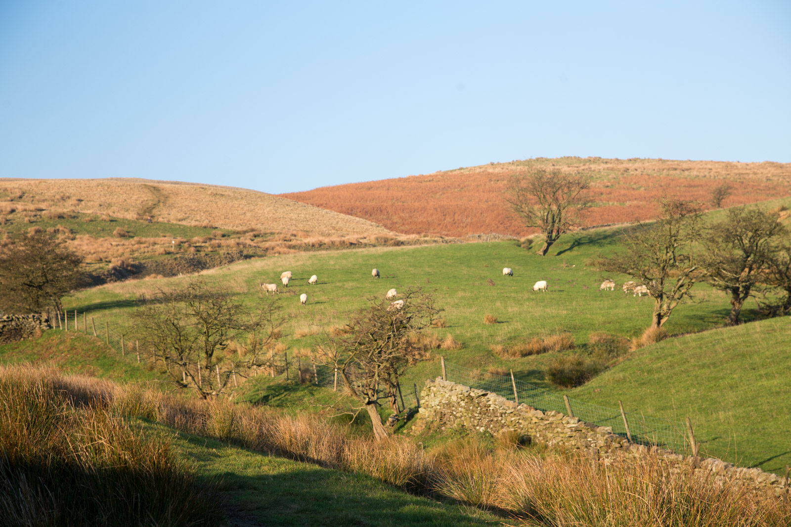 Farming on Pendle Hill